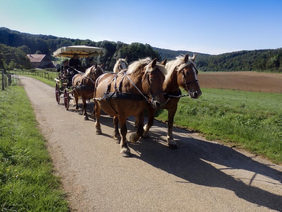 Promenade en calèche à Pont d'Héry