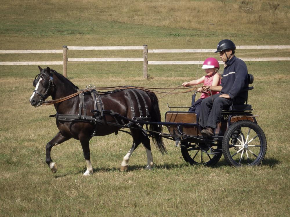 Cours d'attelage enfant avec poney